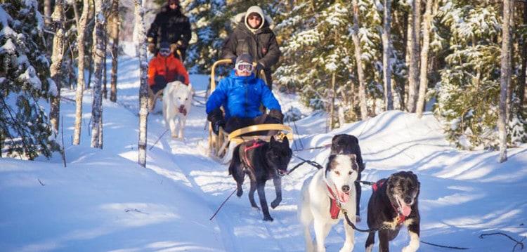 Sled Dog Adventures